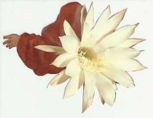 manorafael