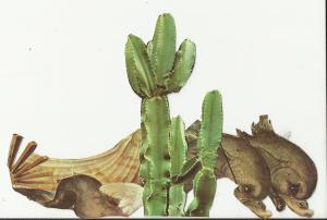 delcactus