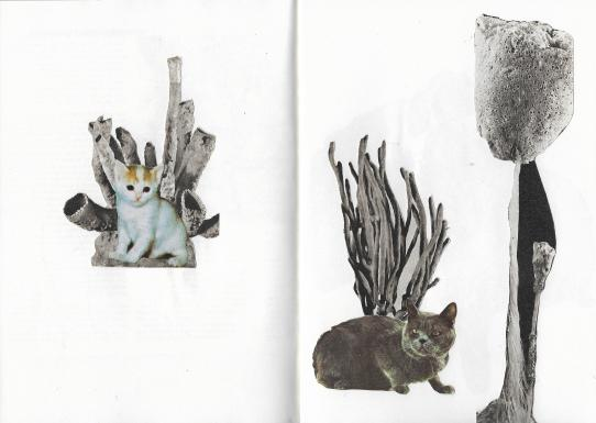 gatoscoral4